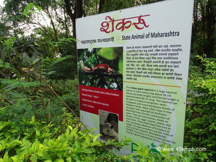 The Indian Giant Squirrel - State Animal of Maharashtra