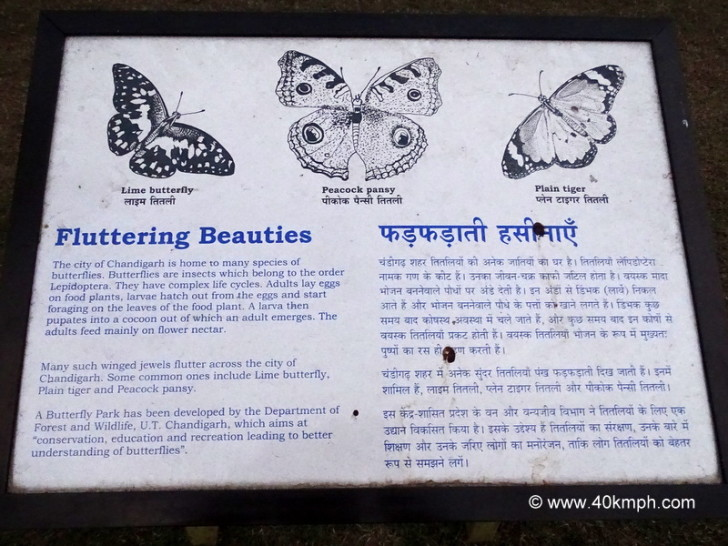 The City of Chandigarh is Home to many Species of Butterflies
