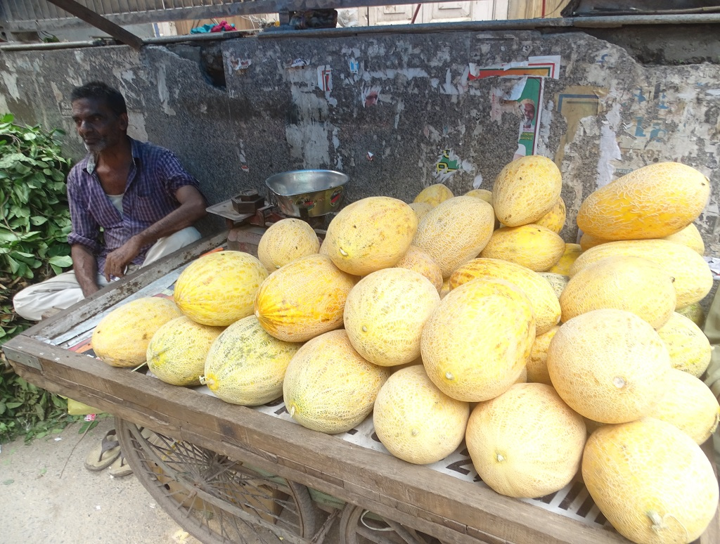 Melons of Afghanistan