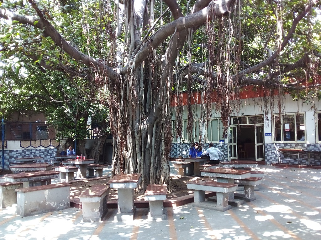 Giant Banyan Tree at Coffee Home (Baba Kharak Singh Marg, Connaught Place, New Delhi, India)